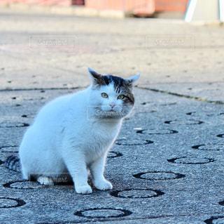 歩道に座っている猫の写真・画像素材[2789177]
