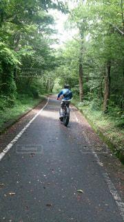 男性,1人,乗り物,自転車,森,サイクリング