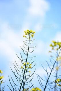 空と黄色の花の写真・画像素材[4437854]
