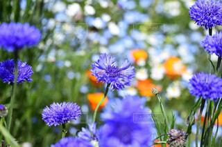 紫色の花と草の写真・画像素材[4437855]