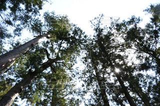 木のクローズアップの写真・画像素材[4437858]