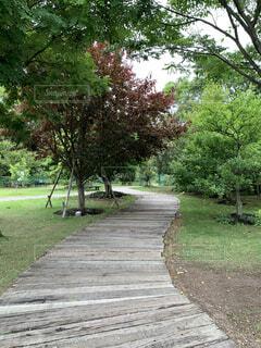 木の側に木がある道の写真・画像素材[4440972]