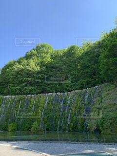 池のクローズアップの写真・画像素材[4442255]