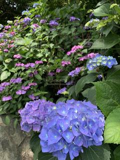 花園のクローズアップの写真・画像素材[4463916]