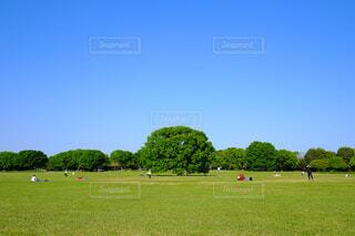 公園 遊び場 憩いの場 大きな木の写真・画像素材[4449934]