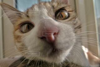 カメラに興味津々の写真・画像素材[4439699]