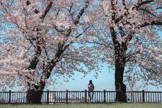 木の前のベンチに座っている人々のグループの写真・画像素材[4439742]