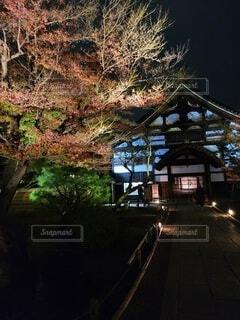 夜の紅葉の写真・画像素材[4440172]