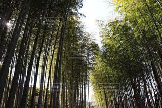 竹林の写真・画像素材[4440402]