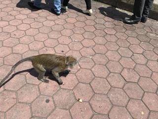 猿の写真・画像素材[2154060]