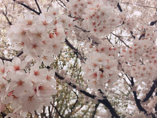 春 - No.435501