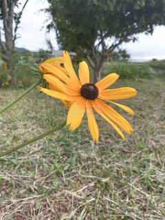 野に咲く花の写真・画像素材[4874453]
