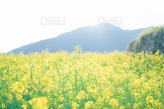 花のクローズアップの写真・画像素材[4465859]