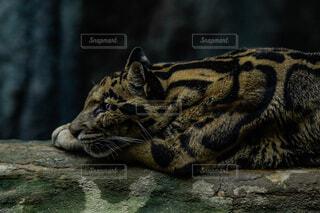 猫のクローズアップの写真・画像素材[4465860]