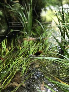 水源とトンボの写真・画像素材[4447434]