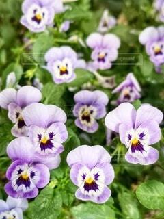 お花の集合の写真・画像素材[4550433]