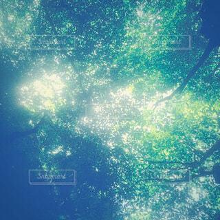 新緑と木漏れ日の写真・画像素材[4517836]