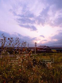 草木越しの夕方の空の写真・画像素材[4517871]