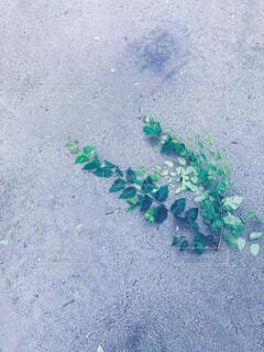 雨の日、砂の上に落ちた木の枝の写真・画像素材[4520994]