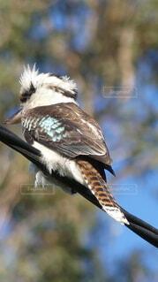 枝に座っている鳥の写真・画像素材[4852020]