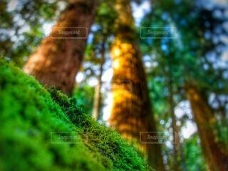 見上げた木の写真・画像素材[4452668]