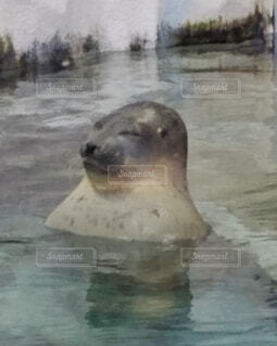 水族館で眠る入浴?中のアザラシの写真・画像素材[4452602]