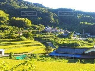 山に囲まれた黄緑色の田んぼの風景の写真・画像素材[4528789]