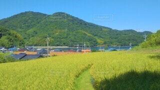 田んぼと山が広がる田舎の風景の写真・画像素材[4528790]