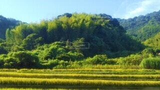 木の生い茂る山と田んぼの風景の写真・画像素材[4528788]