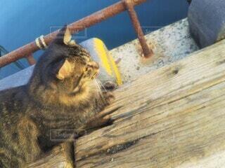 港の海の側に座っている野良猫の写真・画像素材[4533517]