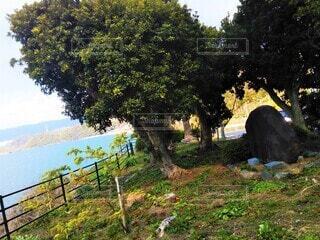 道の外れにある木の写真・画像素材[4556140]