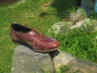 古びた靴と青々とした草の写真・画像素材[4556136]