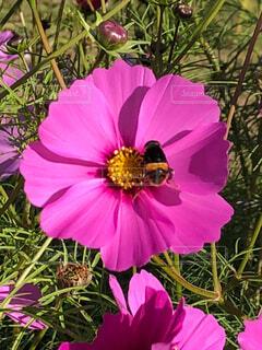 蜂のお食事タイムの写真・画像素材[4455441]