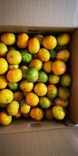木製のテーブルの上に座っているオレンジのグループの写真・画像素材[4555281]