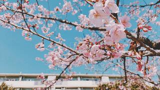 桜と新しい我が家の写真・画像素材[4455859]