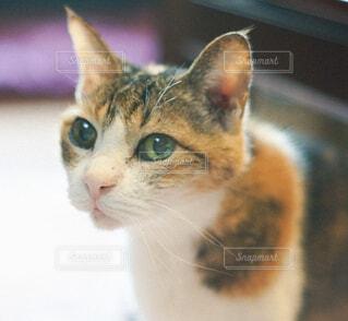何かを見つめる猫の写真・画像素材[4458070]