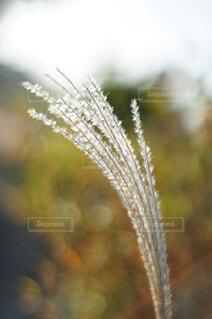 秋の風景の写真・画像素材[4459270]