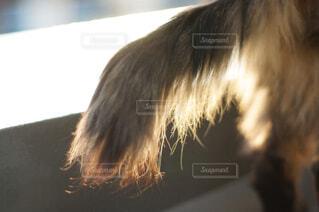 猫の尻尾の写真・画像素材[4459278]
