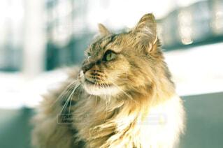 何かを見つめる猫の横顔の写真・画像素材[4460333]