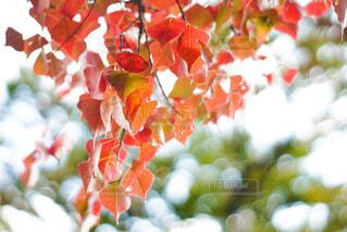 紅葉の季節の写真・画像素材[4460544]