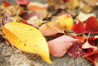 公園の落ち葉の写真・画像素材[4460547]