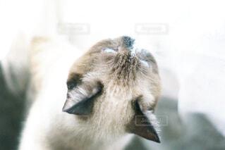 悪戯する子猫の写真・画像素材[4460769]
