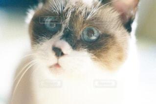 キョトンとする猫の顔の写真・画像素材[4460782]
