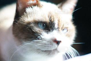 キリッとした猫の顔の写真・画像素材[4460797]