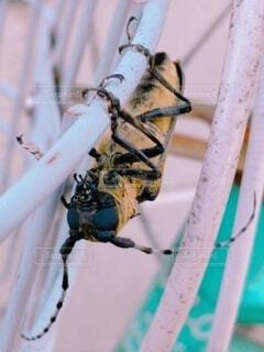 自転車のカゴに掴まる昆虫の写真・画像素材[4807228]