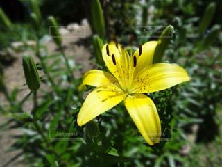 花の写真・画像素材[191799]