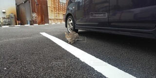 野良猫の写真・画像素材[4459997]
