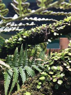 庭の植物の写真・画像素材[4460607]