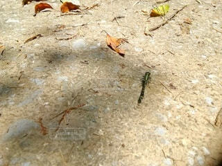 秘境のトンボの写真・画像素材[4523119]