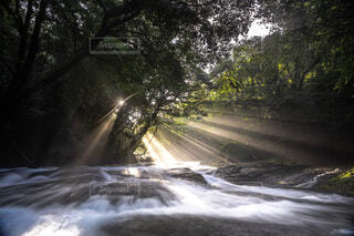 菊池渓谷の写真・画像素材[4466303]